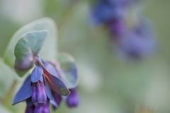 © purple plum photography